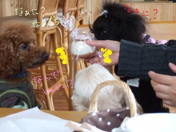 2011_0123美味しい菓子と新年会0060_convert_20110124105539