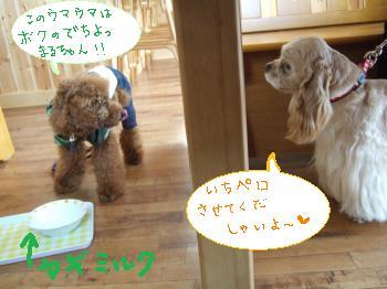 2011_0123美味しい菓子と新年会0055_convert_20110124104624