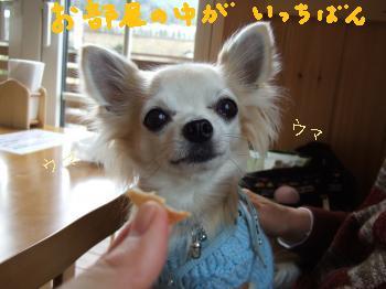 2011_0123美味しい菓子と新年会0059_convert_20110124102951