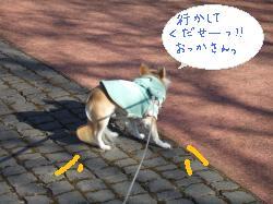 2011_01291月購入、当選、散歩0009_convert_20110131154654