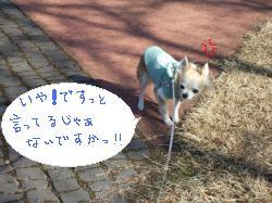 2011_01291月購入、当選、散歩0010_convert_20110131154740