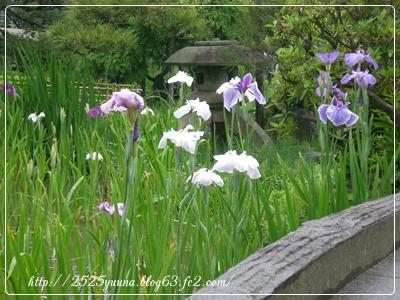 F20110618堀切菖蒲園05