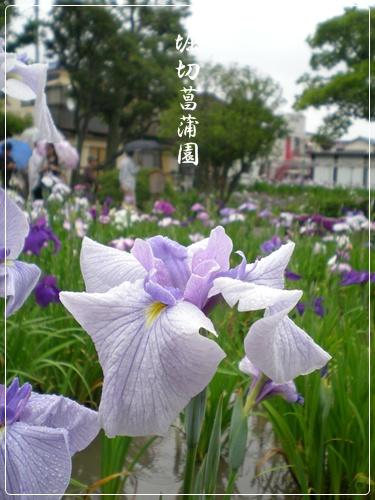 F20110618堀切菖蒲園01