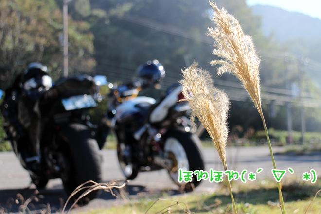 IMG_4588.jpg