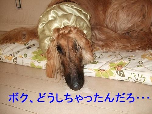 PO20110524_0009.jpg