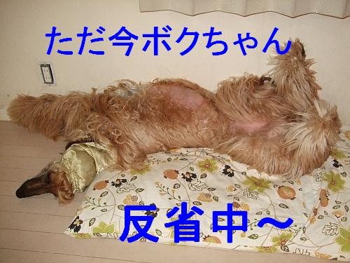 PO20110524_0016.jpg