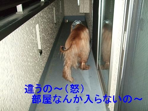 PO20110525_0000.jpg
