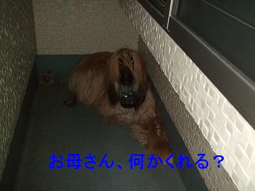 PO20110525_0001.jpg