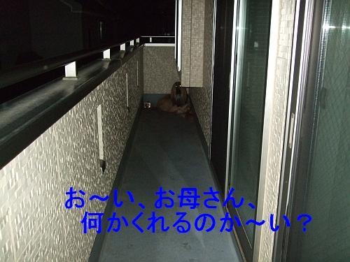 PO20110525_0003.jpg