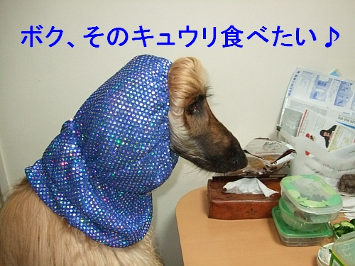 PO20110609_0004.jpg