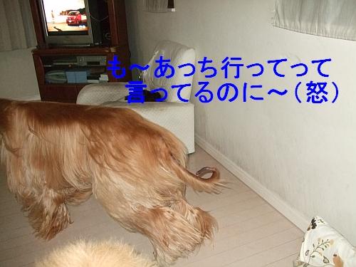 PO20110612_0003.jpg