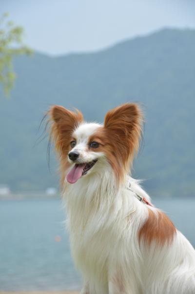 きなこ 西湖 2012