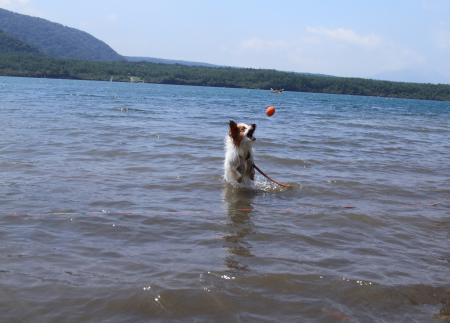 きなこ西湖2011
