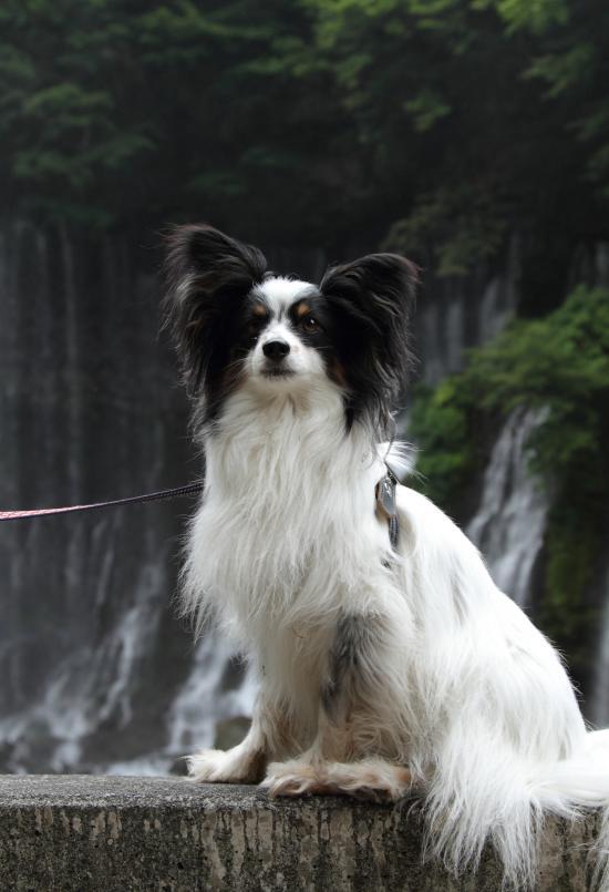 イチロー 白糸の滝