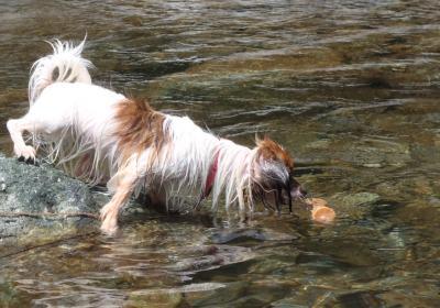レイラ川2011