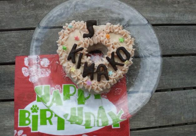 きなこ5才誕生日
