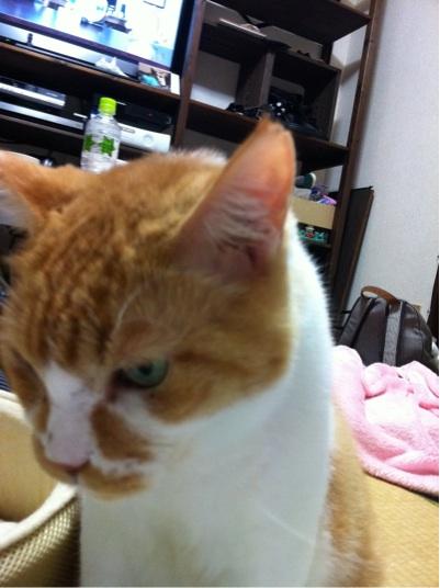 iphone_20111025195925.jpg