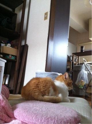 iphone_20111103213610.jpg