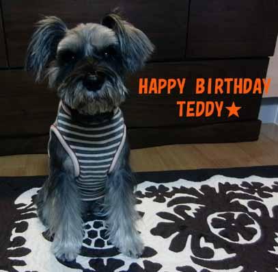 テディ8歳の誕生日