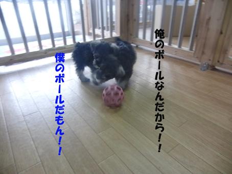 武蔵&玄太ボール遊び