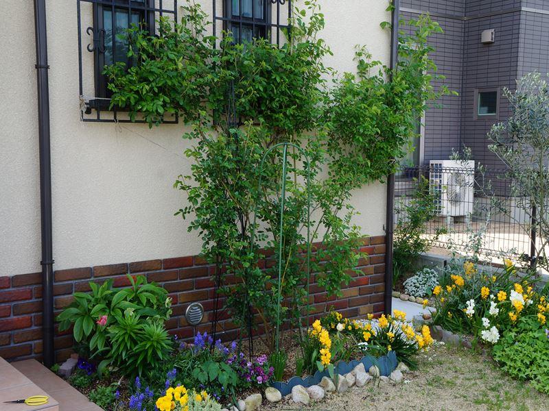 玄関側の庭