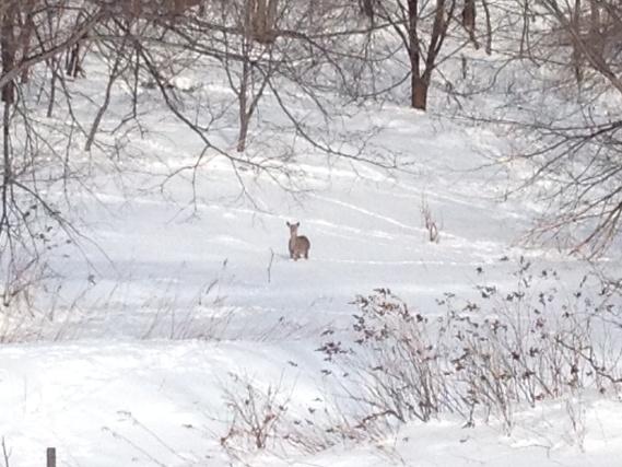 留辺蘂の鹿