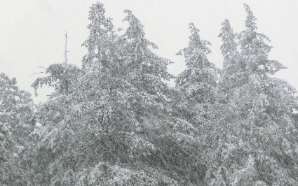 CIMG6212.モンスターのような森の木JPG