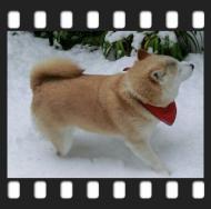 kako-VOezvLXLR68SrllN雪の庭のカノン1