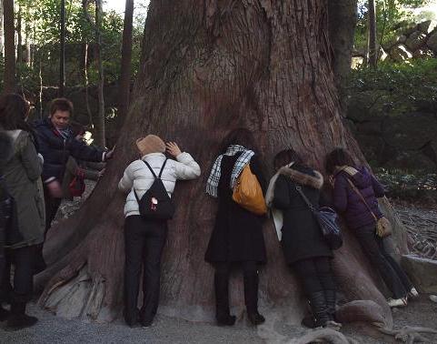 木の鼓動 086