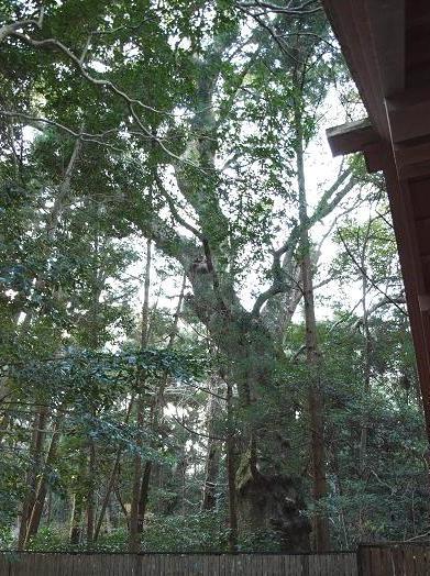 謎の木 181