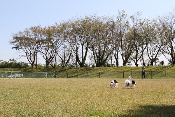 2011_10_07 マザー牧場 ブログ用2011_10_07 マザー牧場 アルバム用DPP_0124