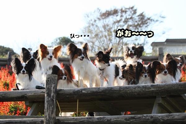 2011_10_07 マザー牧場 ブログ用2011_10_07 マザー牧場 アルバム用DPP_0200