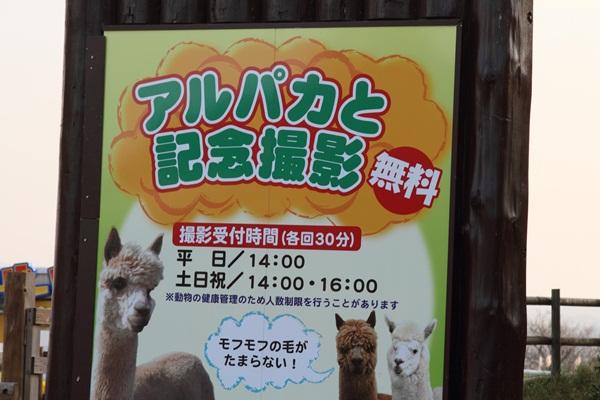 2011_10_07 マザー牧場 ブログ用2011_10_07 マザー牧場 アルバム用DPP_0280