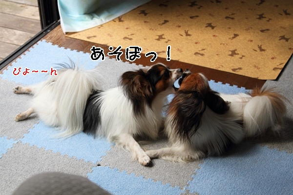 2011_10_09 遊ぶワルっこDPP_0003
