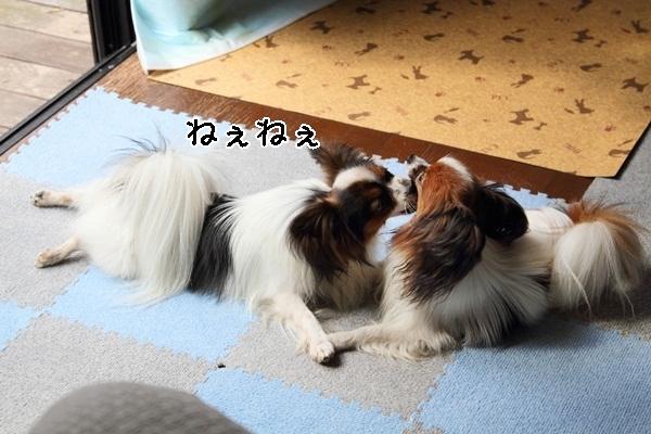 2011_10_09 遊ぶワルっこDPP_0004