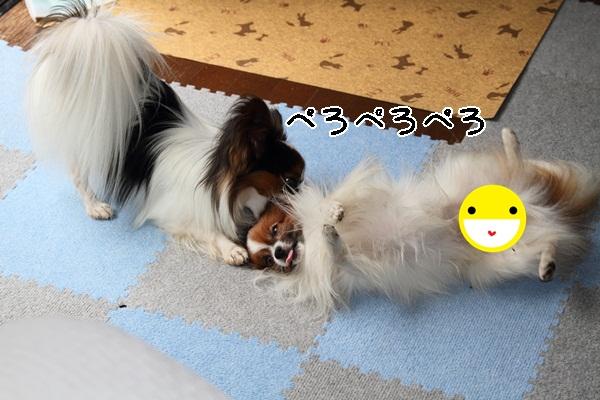 2011_10_09 遊ぶワルっこDPP_0009