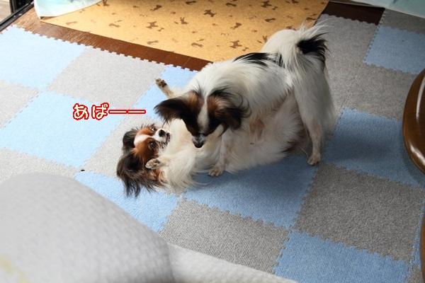 2011_10_09 遊ぶワルっこDPP_0006