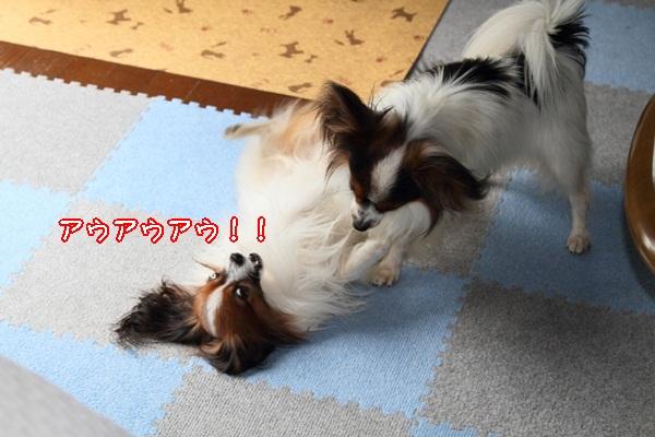 2011_10_09 遊ぶワルっこDPP_0008