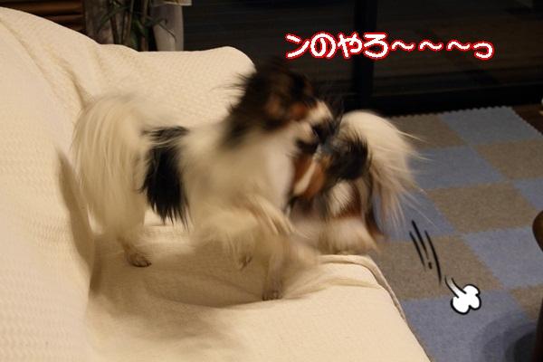 2011_10_08 わんこ豆腐DPP_0041