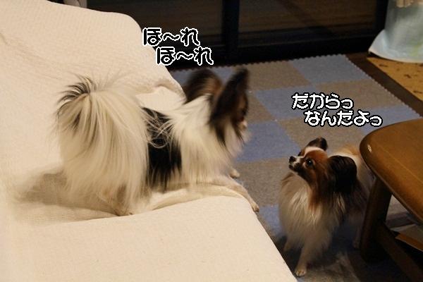 2011_10_08 わんこ豆腐DPP_0038
