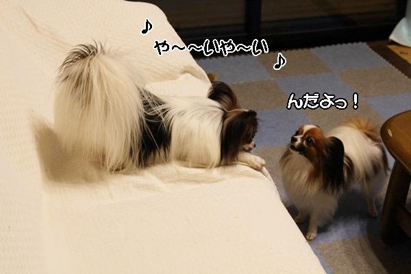 2011_10_08 わんこ豆腐DPP_0037