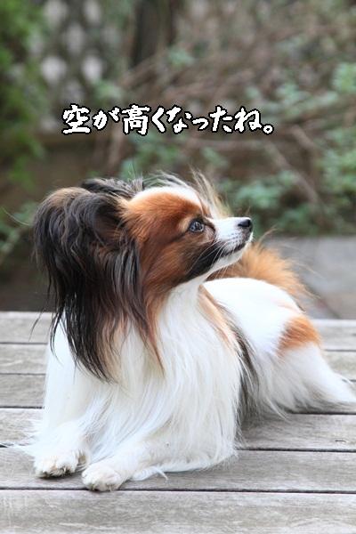 2011_10_25 秋のお散歩DPP_0014