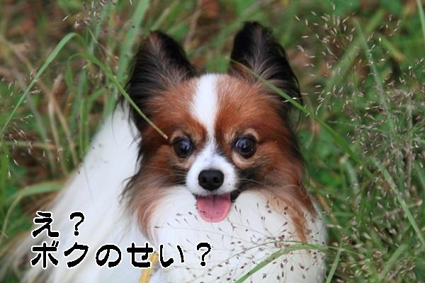 2011_10_25 秋のお散歩DPP_0049