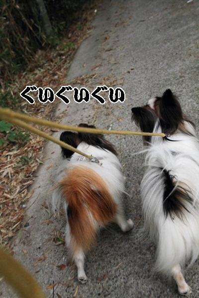 2011_10_25 秋のお散歩DPP_0018