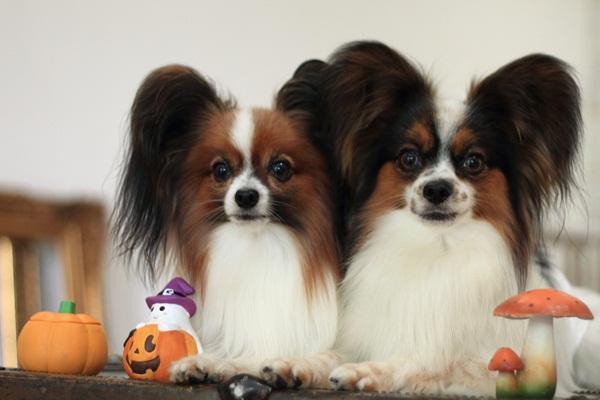 2011_09_12 EOS犬撮影DPP_0054