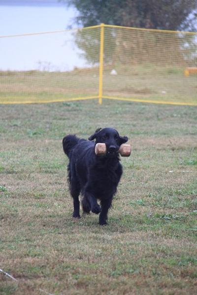 2011_11_06 訓練競技会DPP_0016