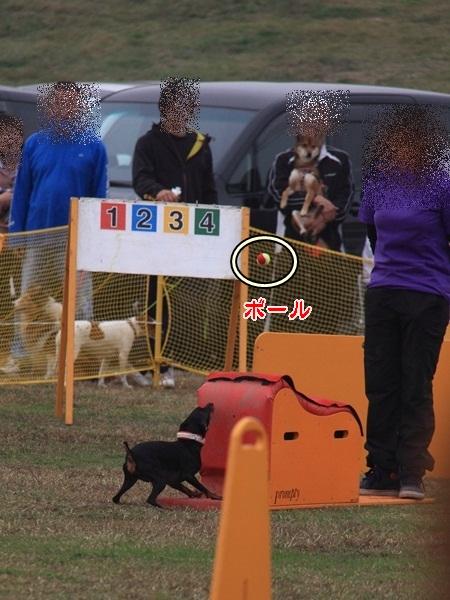 2011_11_06 訓練競技会DPP_0089