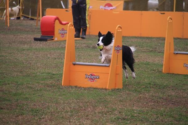 2011_11_06 訓練競技会DPP_0113