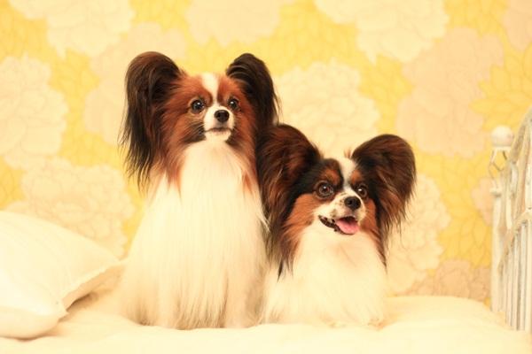 2011_09_12 EOS犬撮影DPP_0176