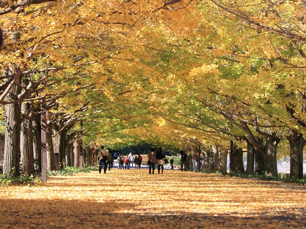 2011_11_16 昭和記念公園  ブログサイズ2011_11_16 昭和記念公園DPP_0017